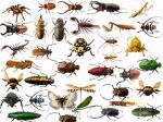 insect species