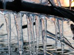 winter icicle